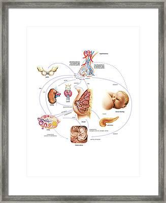 Breastfeeding Framed Print