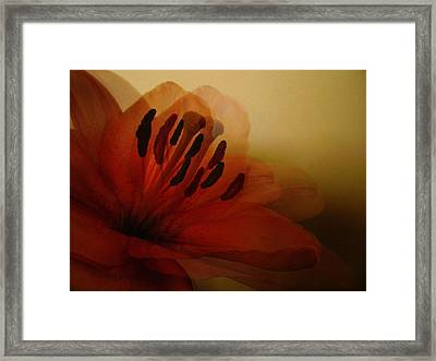 Breath Of The Lily Framed Print by Marianna Mills
