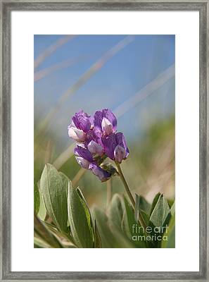 Breathe In The Air No.2 Framed Print