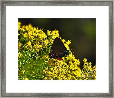 Breathtaking Butterfly Framed Print by Al Powell Photography USA