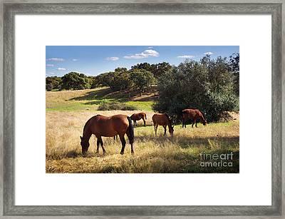 Breed Of Horses Framed Print by Carlos Caetano