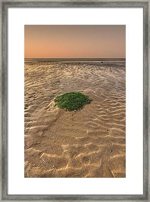 Breeze Of Dawn Framed Print by Evelina Kremsdorf