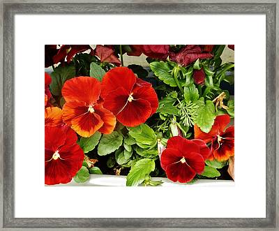 Framed Print featuring the photograph Brick Pansies by VLee Watson