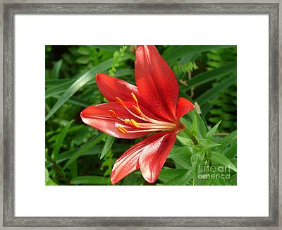 Brick Red  Framed Print by Lew Davis