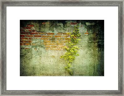 Brick Wall Framed Print by Linda Olsen