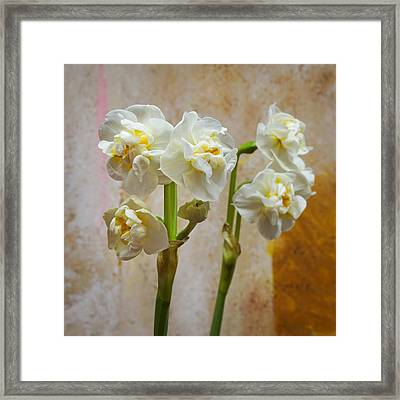Bridal Crown Narcissus Double Framed Print by Lutz Baar