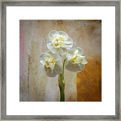 Bridal Crown Narcissus Square Framed Print by Lutz Baar