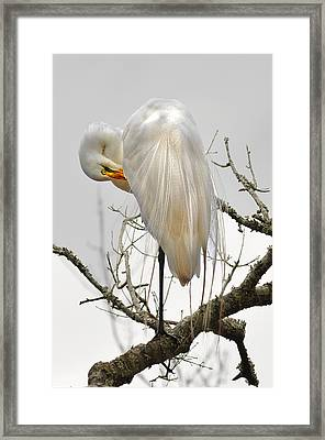 Bride Of Magnolia Framed Print by Donnie Smith
