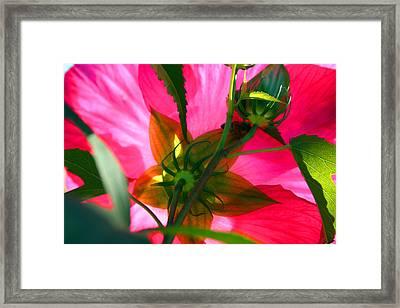 Bridge Of Flowers Framed Print by Karma Boyer