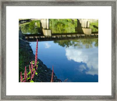 Bridge Reflection Framed Print by Shane McCallister