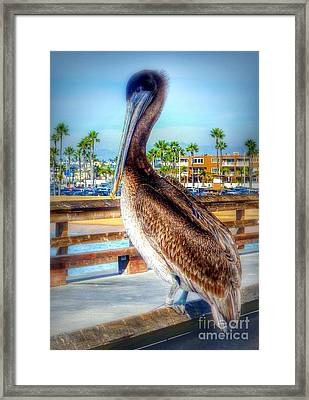 Brief Pelican Encounter  Framed Print