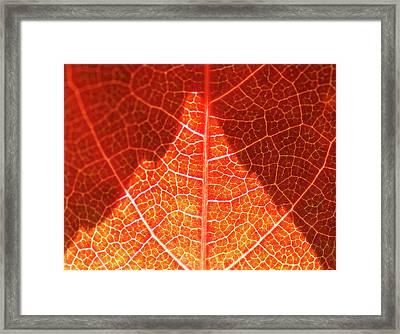Bright And Dark Framed Print by Heiko Koehrer-Wagner