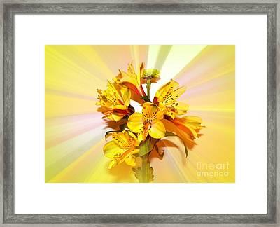 Bright As The Sun Framed Print by Carol Grenier