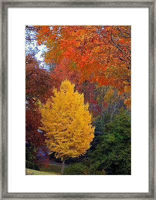 Bright Autumn Framed Print by Paula Tohline Calhoun