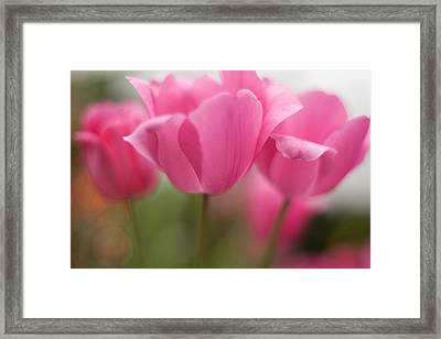 Bright Bunch Of Tulips Framed Print by Mike Reid