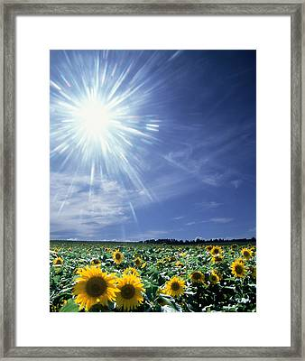 Bright Burst Of White Light Above Field Framed Print by Panoramic Images