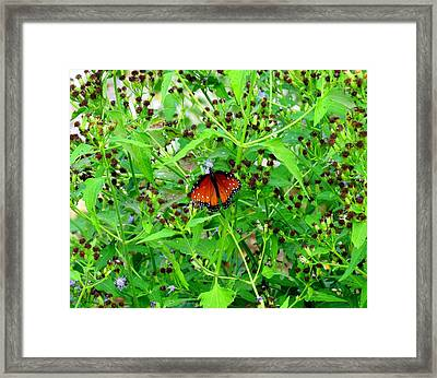 Framed Print featuring the photograph Bright Butterfly by David  Norman