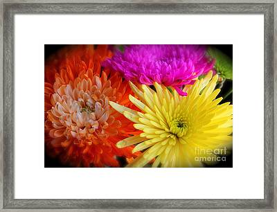 Bright Chrysanthemums Framed Print by The Art of Alice Terrill