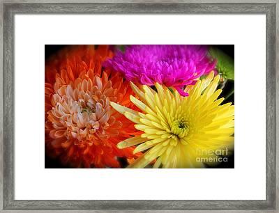 Bright Chrysanthemums Framed Print