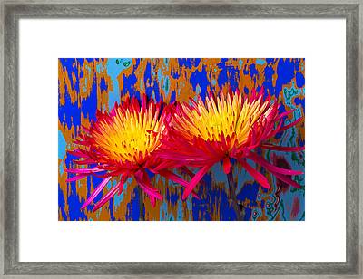 Bright Colorful Mums Framed Print by Garry Gay