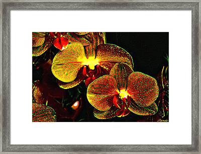 Bright Couple  Framed Print by Renee Anderson