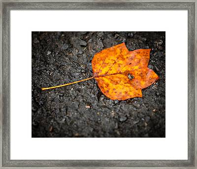 Bright Dark And Alone Framed Print