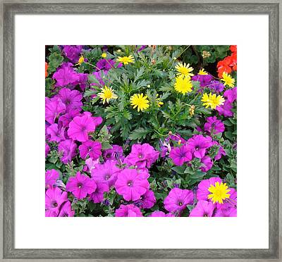Bright Day Framed Print by Van Ness
