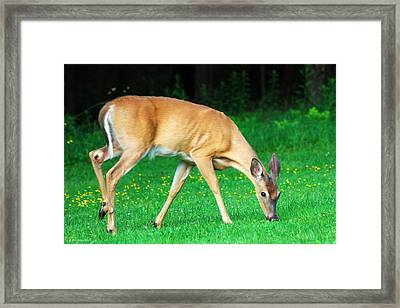Bright Eyed And Bushy Tailed Framed Print by Christina Rollo