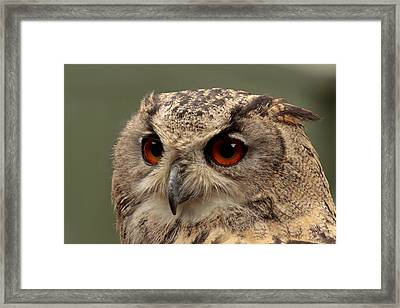 Bright Eyed Eagle Owl  Framed Print by Simon Gregory