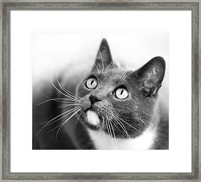 Bright Eyes Framed Print by Marc Huebner