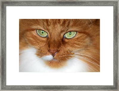 Bright Eyes Framed Print by Rhonda Humphreys