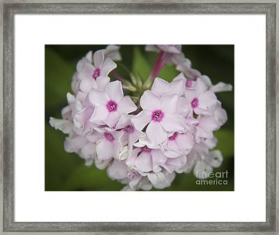 Bright Eyes Framed Print by Teresa Mucha