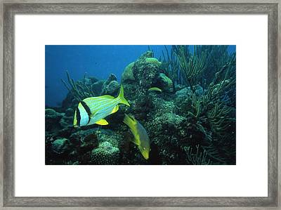 Bright Fish Framed Print by Retro Images Archive