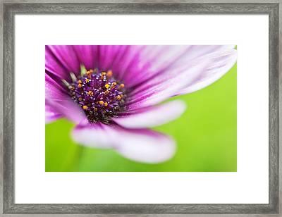 Bright Floral Display Framed Print by Natalie Kinnear