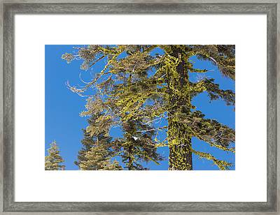 Bright Lichen Framed Print by Jan Davies