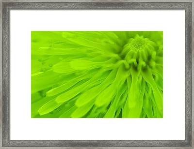 Bright Lime Green Dandelion Close Up Framed Print by Natalie Kinnear
