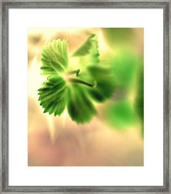 Bright One Framed Print by Christine Ricker Brandt