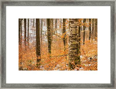 Bright Orange Leaves In Winterly Forest Framed Print by Matthias Hauser