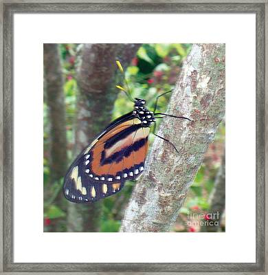 Bright Orange Life Framed Print by Kryztina Spence