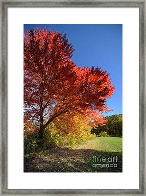 Bright Orange Of Fall Framed Print by Amy Cicconi