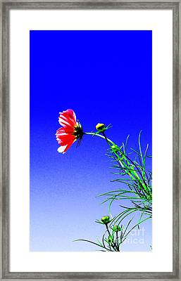 Bright Pink Bloom Framed Print by Tina M Wenger