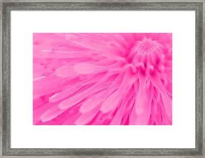 Bright Pink Dandelion Close Up Framed Print by Natalie Kinnear