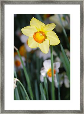 Framed Print featuring the photograph Bright Shiny Face by Sheila Byers
