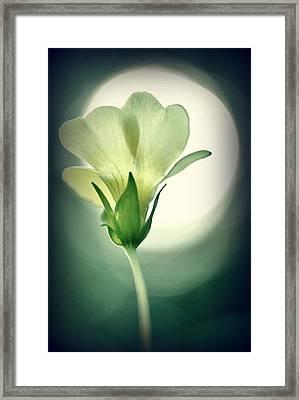 Bright Spot Framed Print by Kelly Nowak
