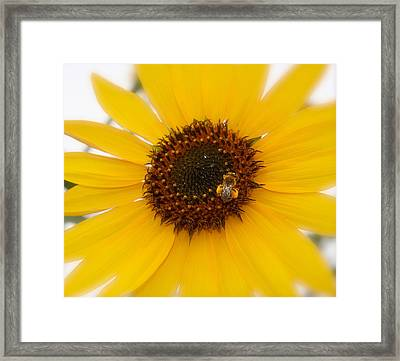 Framed Print featuring the photograph Vibrant Bright Yellow Sunflower With Honey Bee  by Jerry Cowart