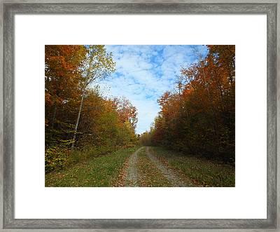 Bright Trail Framed Print