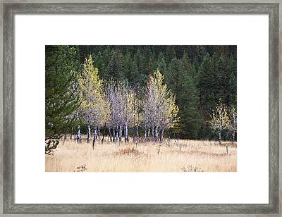 Bright Yellow And Green Framed Print by Susan Crossman Buscho
