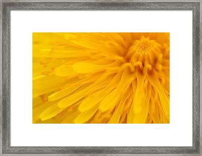 Bright Yellow Dandelion Flower Framed Print by Natalie Kinnear