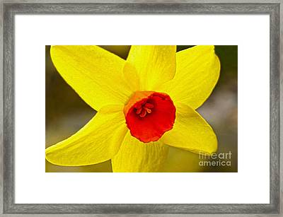 Bright Yellow Framed Print by Nur Roy