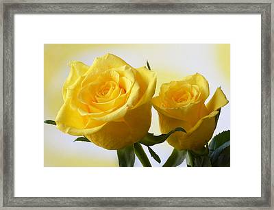 Bright Yellow Roses. Framed Print by Terence Davis